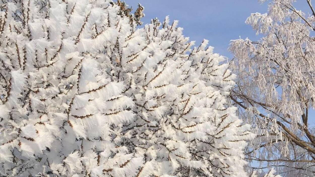 Des arbres chargés de givre avec un ciel bleu