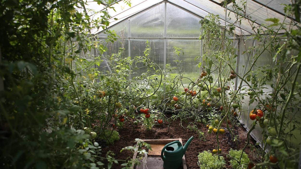 Une serre où on fait pousser des légumes.