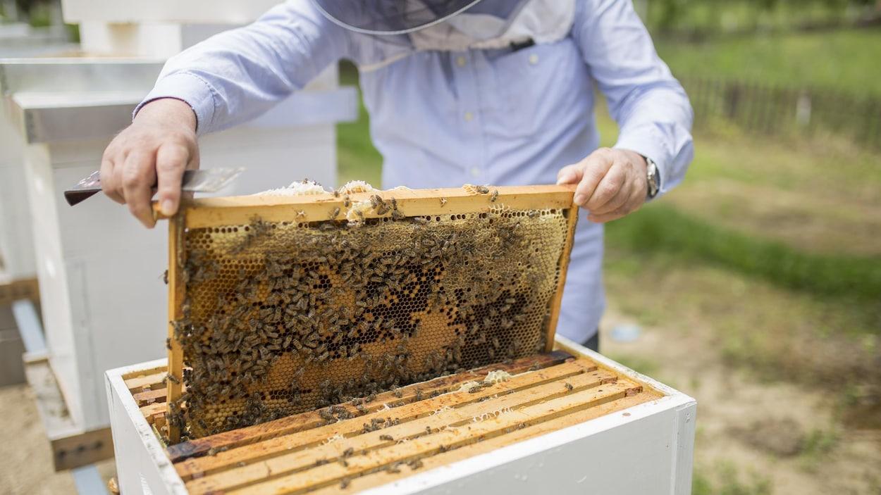Les apiculteurs et apicultrices jouent un rôle essentiel pour la survie des abeilles.