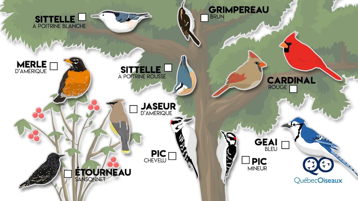 On voit une planche avec les oiseaux et leurs noms