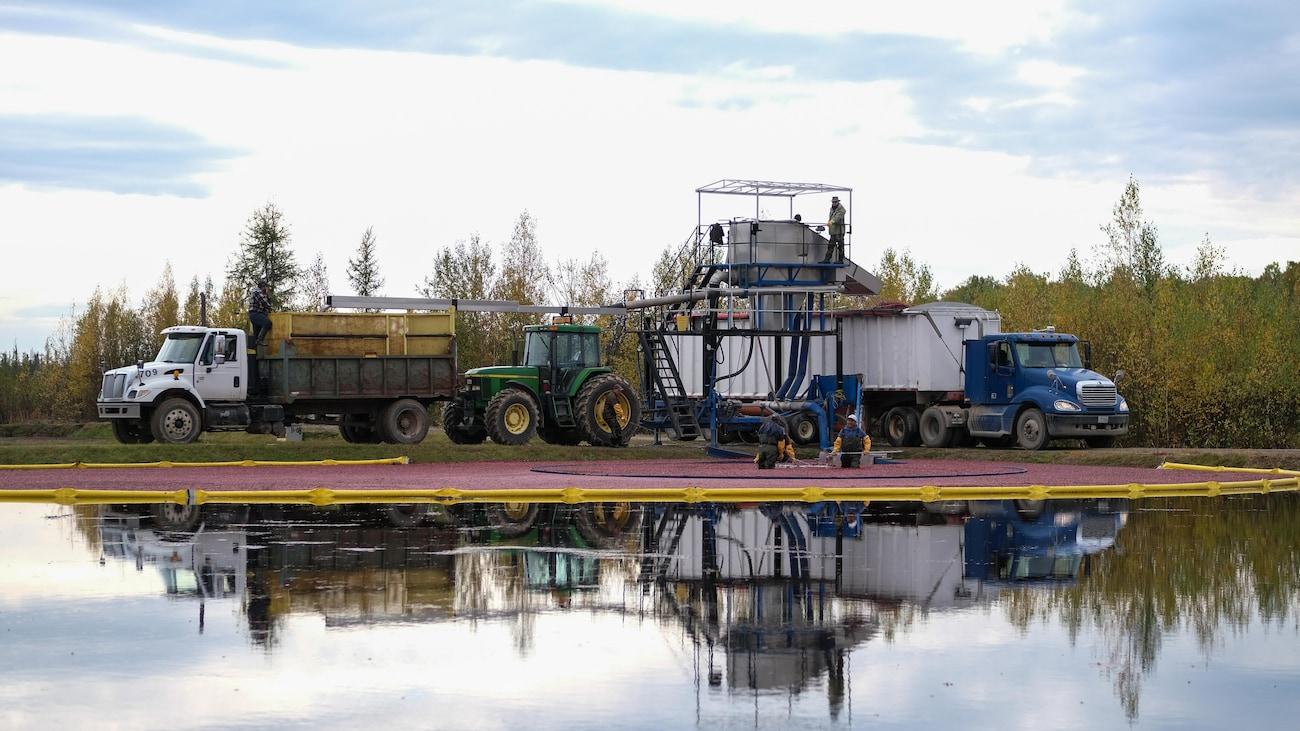 La pompe absorbe l'eau et les fruits qu'elle sépare mécaniquement. L'eau sera stockée dans un bassin afin d'être réutilisée dans un autre champ.