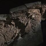 La tête du fossile d'Elpistostege watsoni
