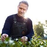un homme touchant des feuilles de thé, au soleil.