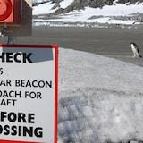 A penguin walks across a runway in Antarctica.