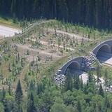 Viaduc boisé au-dessus d'une autoroute