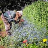 Le fermier Alec Maillet-Haydock montre fièrement une parcelle de son jardin.