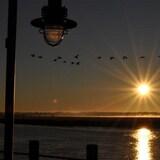 Une volée d'oiseaux au dessus de la rivière Petitcodiac à Dieppe alors que le soleil se couche.