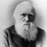 Photo du naturaliste Charles Darwin prise vers 1875.