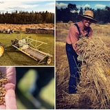 Un collage de photo d'une ferme à l'ancienne