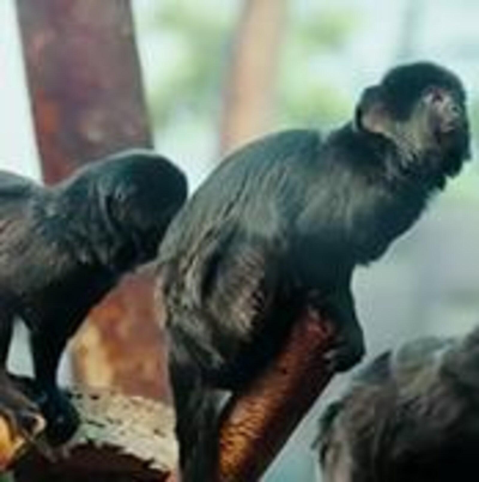 Solitaire ou en groupe, chaque animal trouve sa place au zoo de Granby