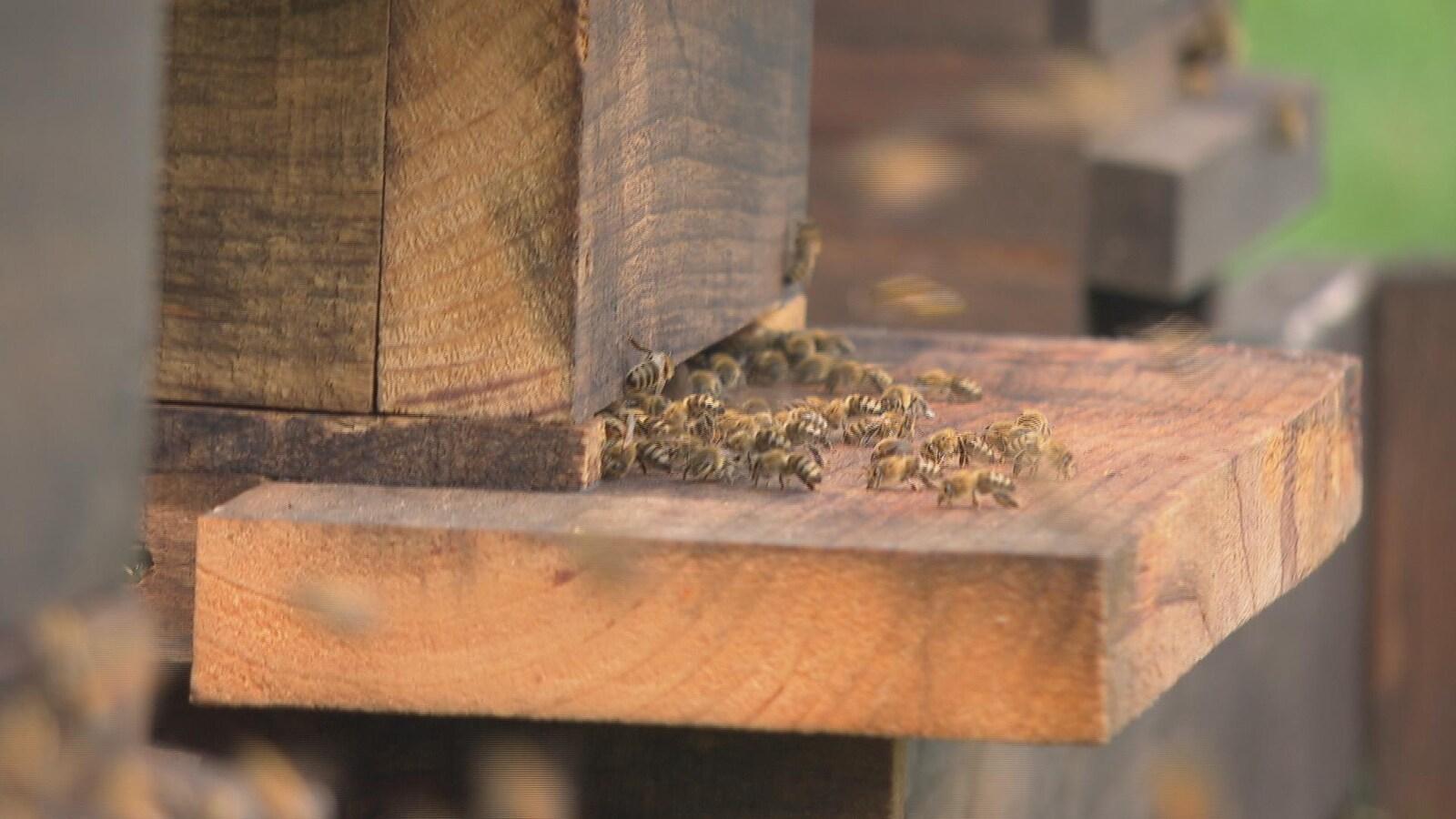 Des abeilles à l'extérieur d'une ruche.