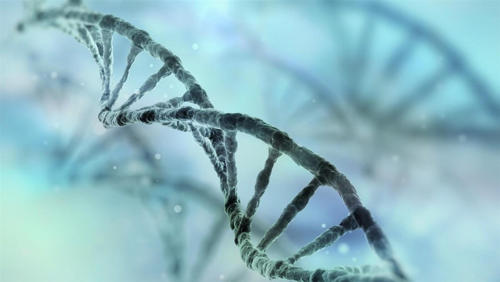 Représentation d'un segment d'acide désoxyribonucléique (ADN)