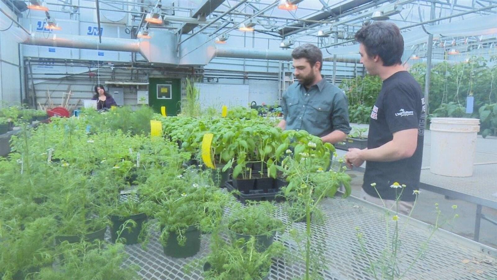 Des étudiants en agriculture biologique du Cégep de Victoriaville