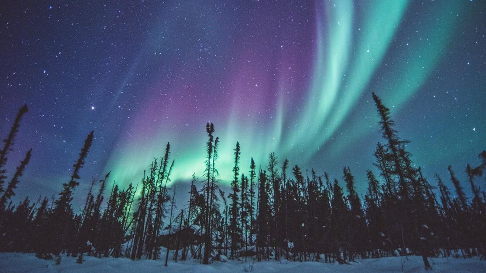 Des aurores boréales sous un ciel étoilé.