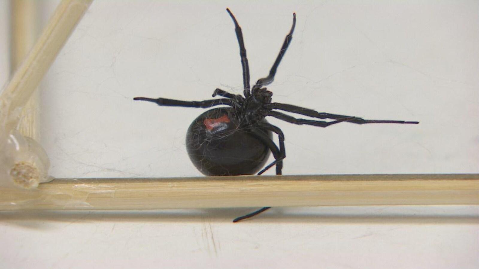 Une araignée tisse une fine toile.