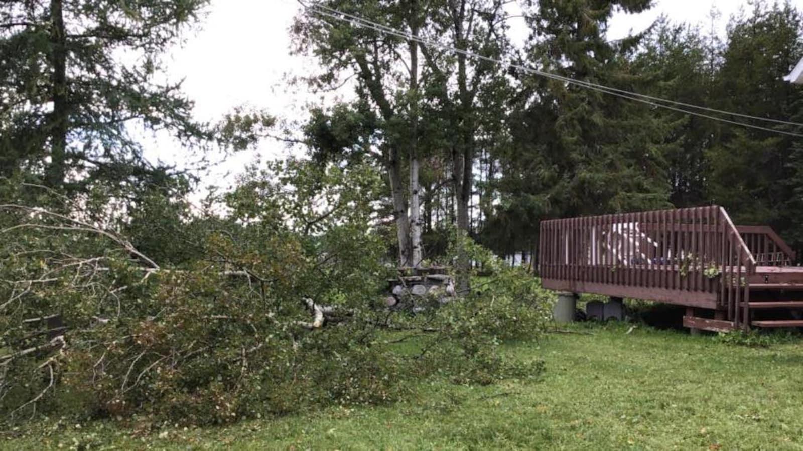 Un arbre est tombé au sol après des vents violents.