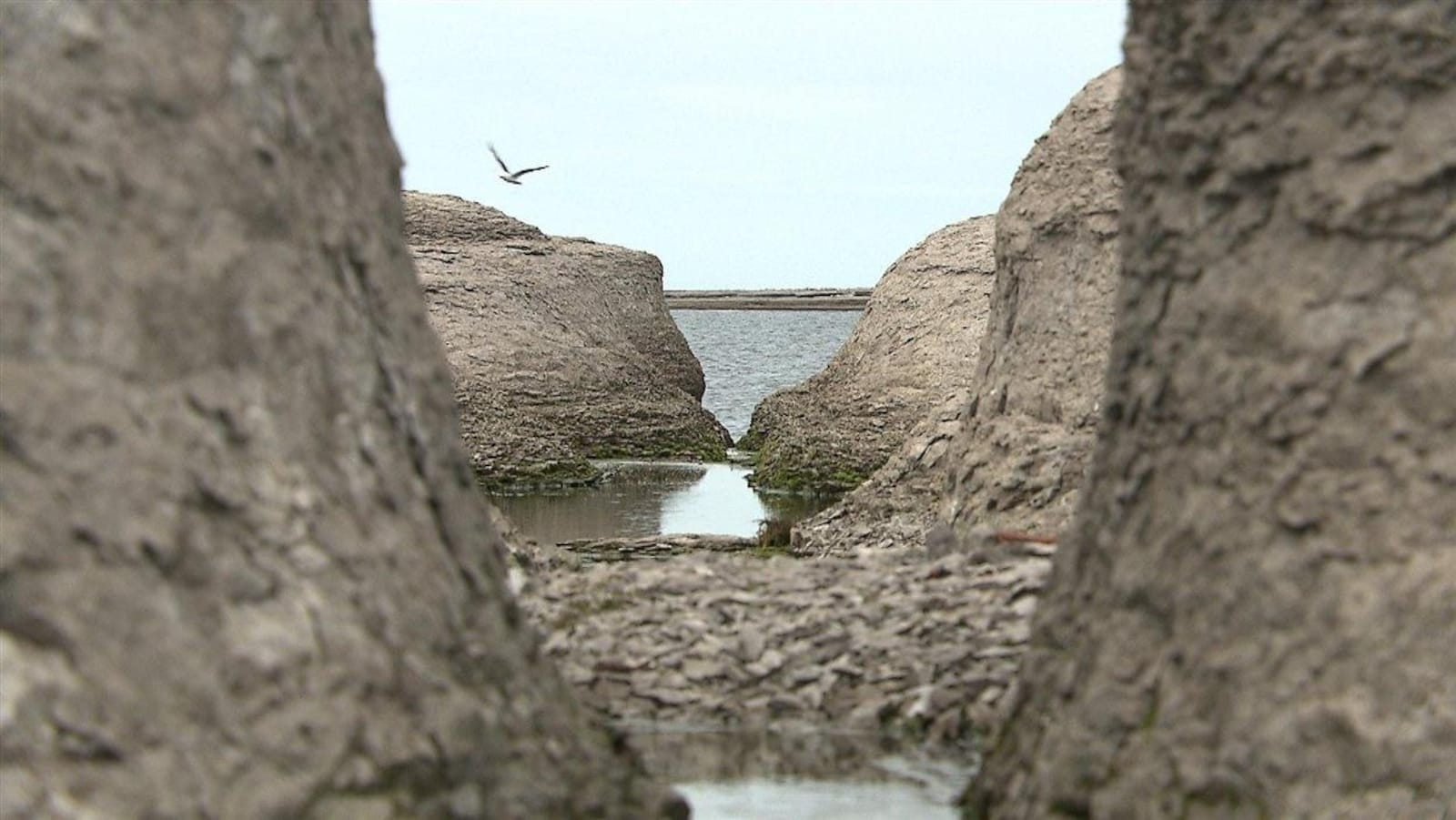 L'Archipel-de-Mingan est un véritable sanctuaire pour les oiseaux.
