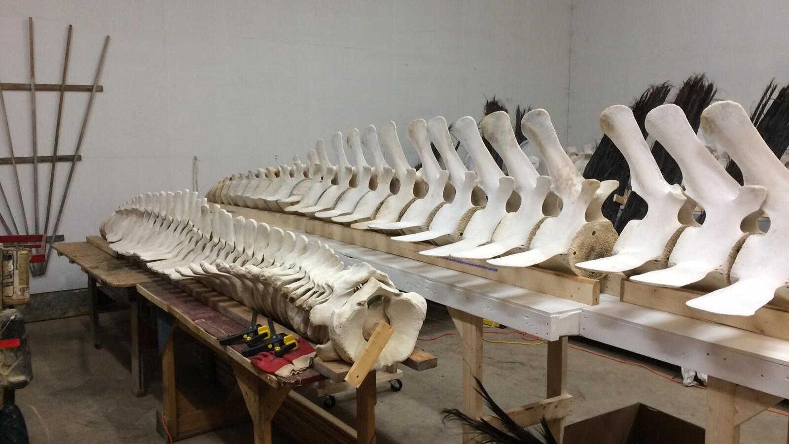 Deux squelettes de baleines en train d'être assemblées.
