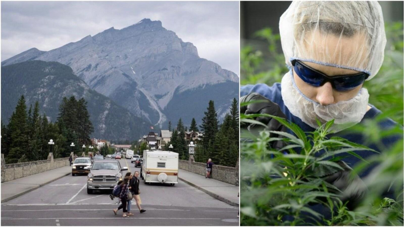 D'un côté, on voit la municipalité de Banff, avec deux filles qui traversent la rue et la montagne en arrière, de l'autre on voit quelqu'un en train de faire pousser un plant de marijuana.