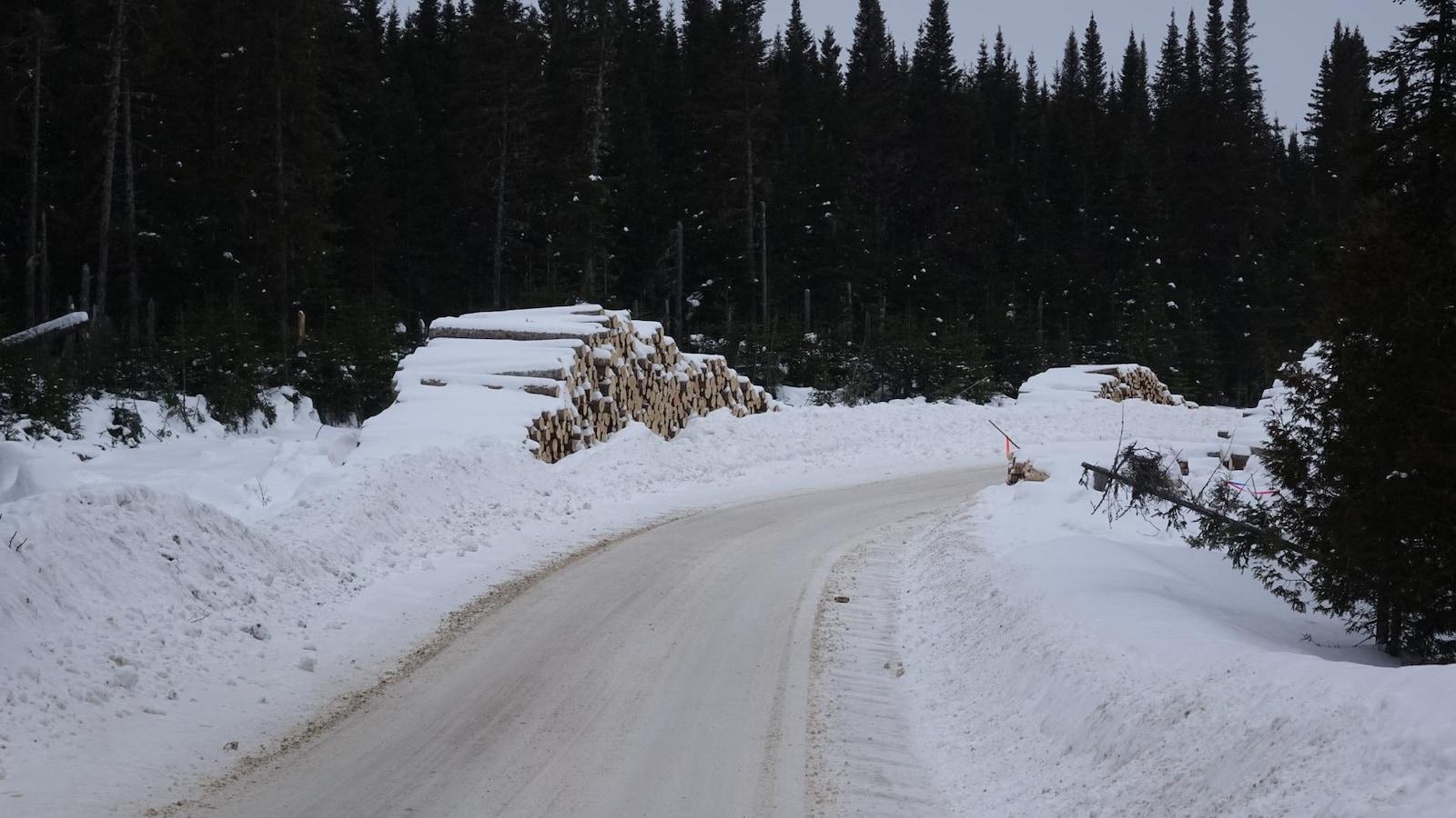 Cordes de bois sur un chemin forestier