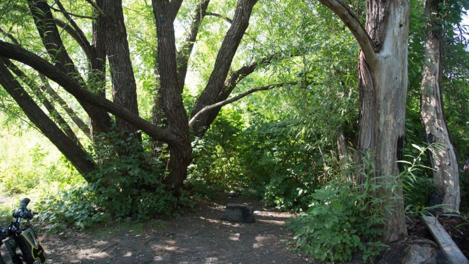 Des arbres de bonne taille dans le boisé.