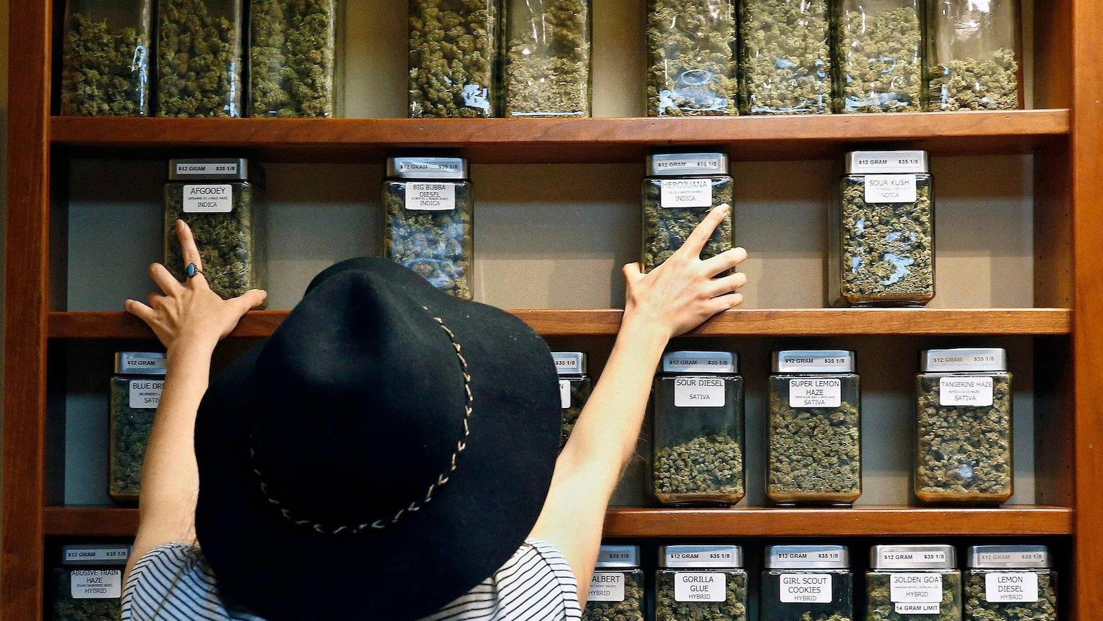 Une femme s'empare de pots en verre contenant des têtes de cannabis.