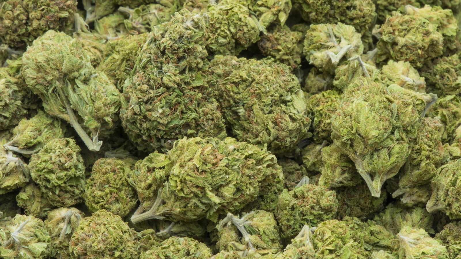 Cannabis séché.