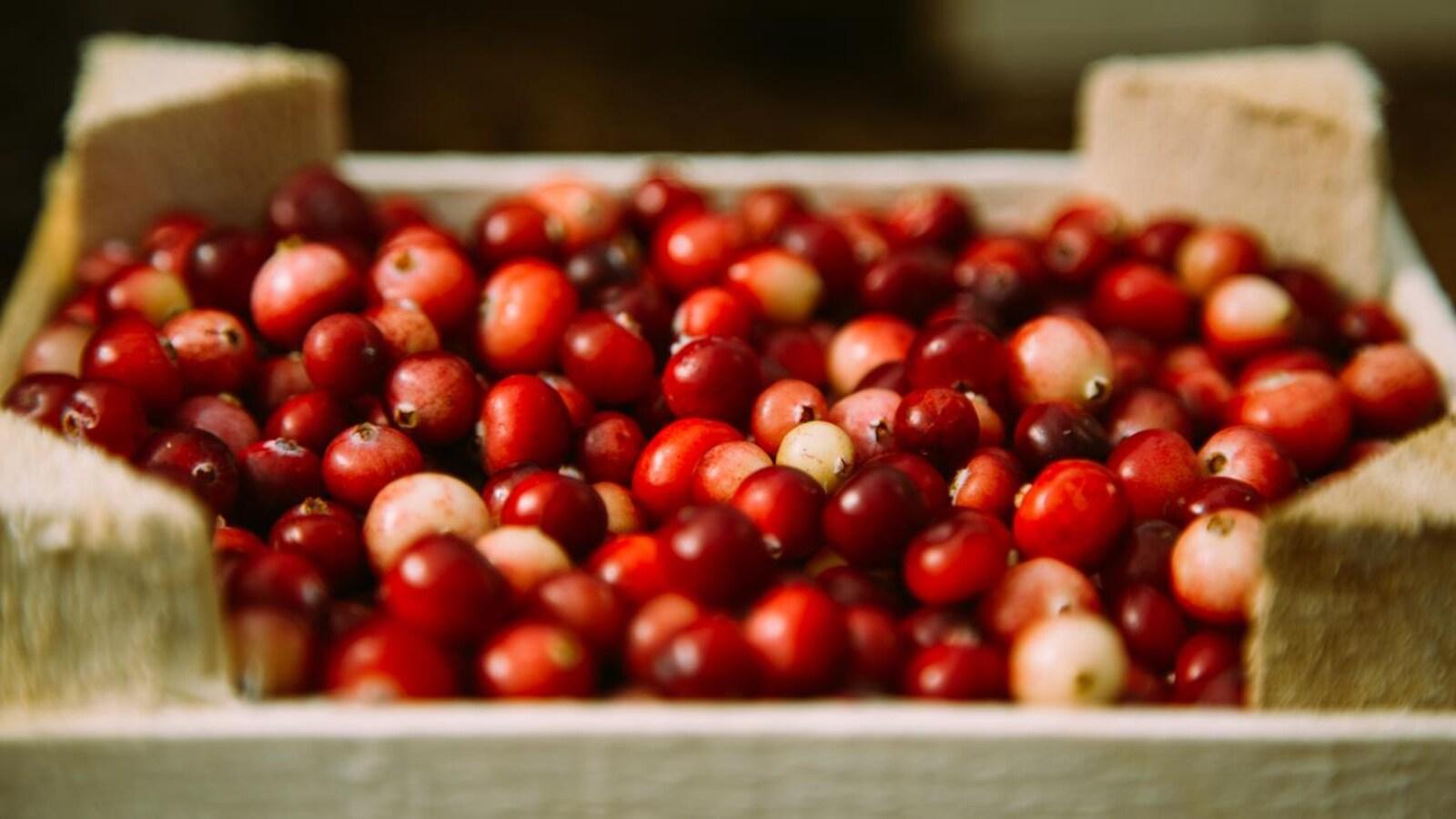 Une caisse en bois remplies de canneberges fraîches bien rouges.