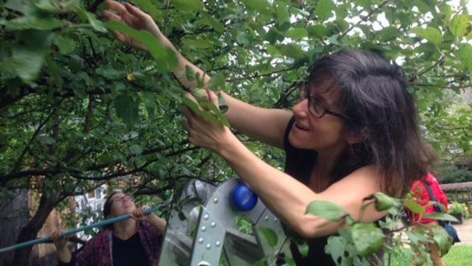 Une femme sur une échelle en train d'entretenir un arbre.