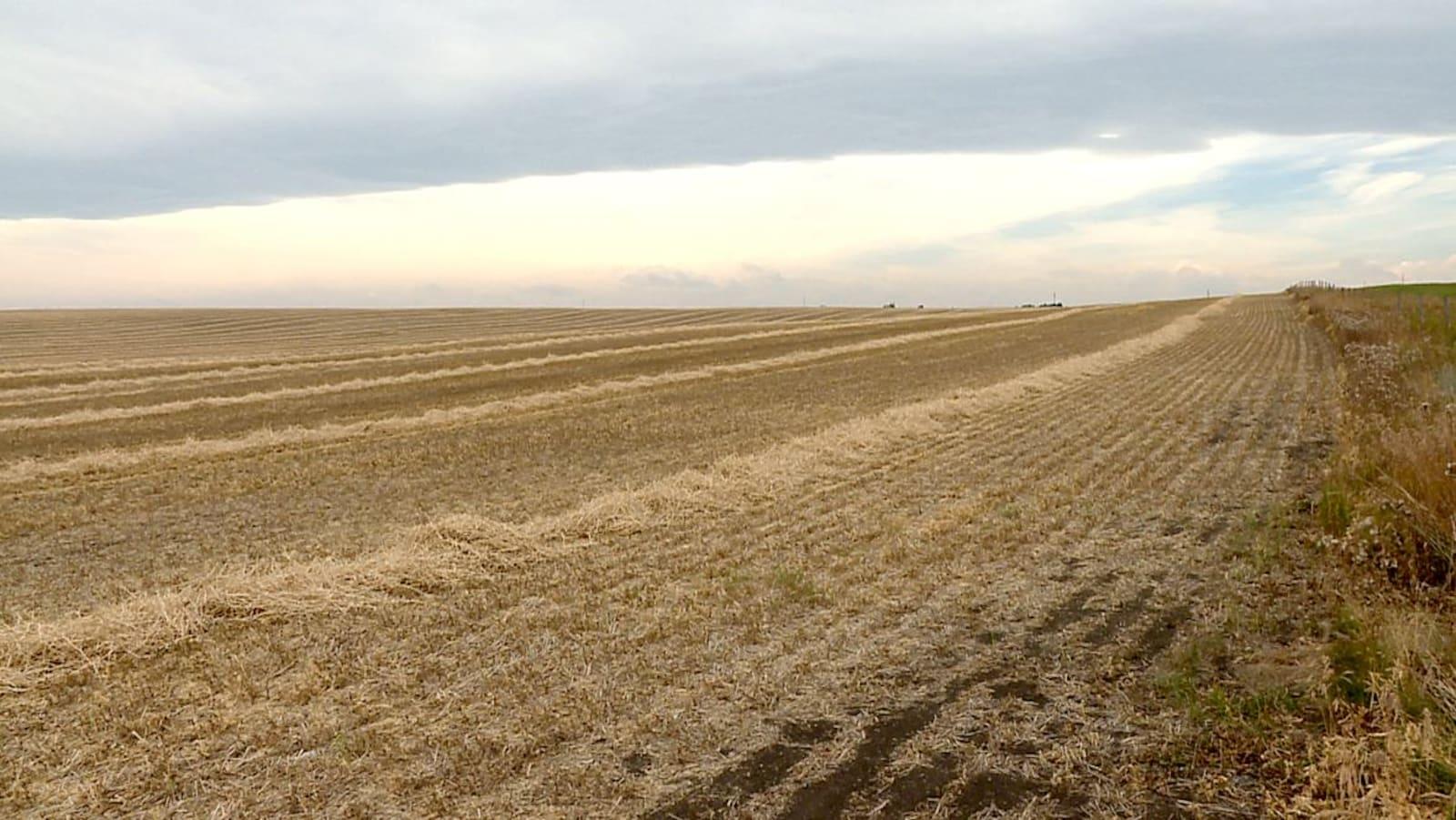 Un énorme champ qui vient d'être récolté sous un ciel nuageux.