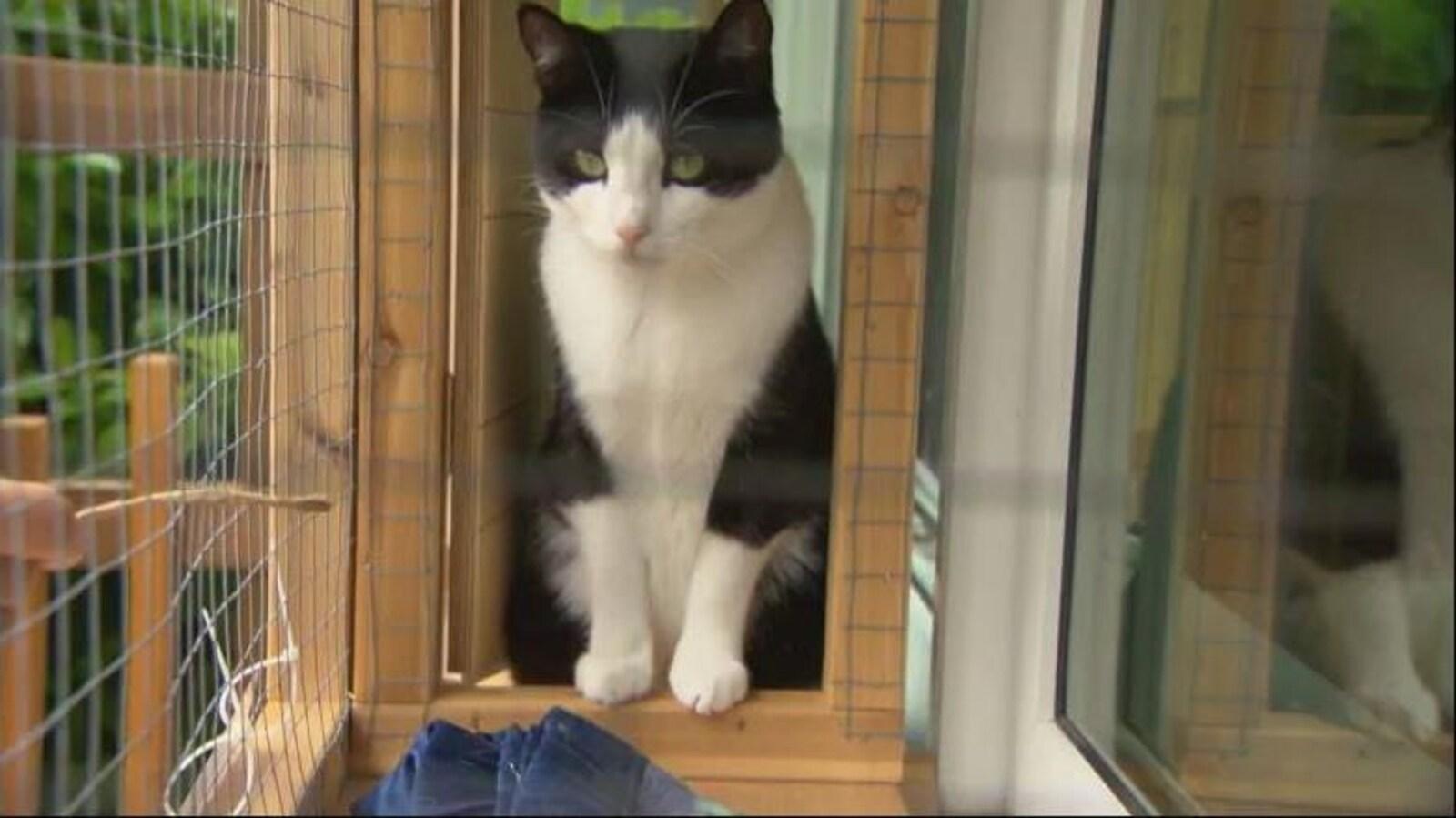 Une chat dans une cage