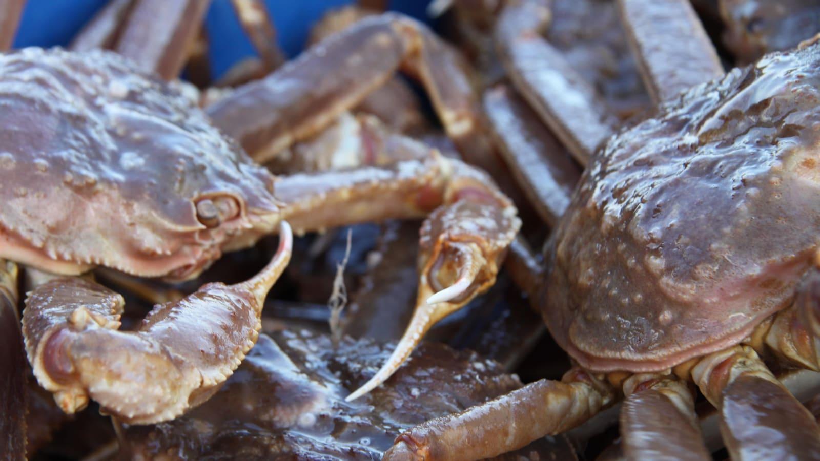 Crabes à l'usine