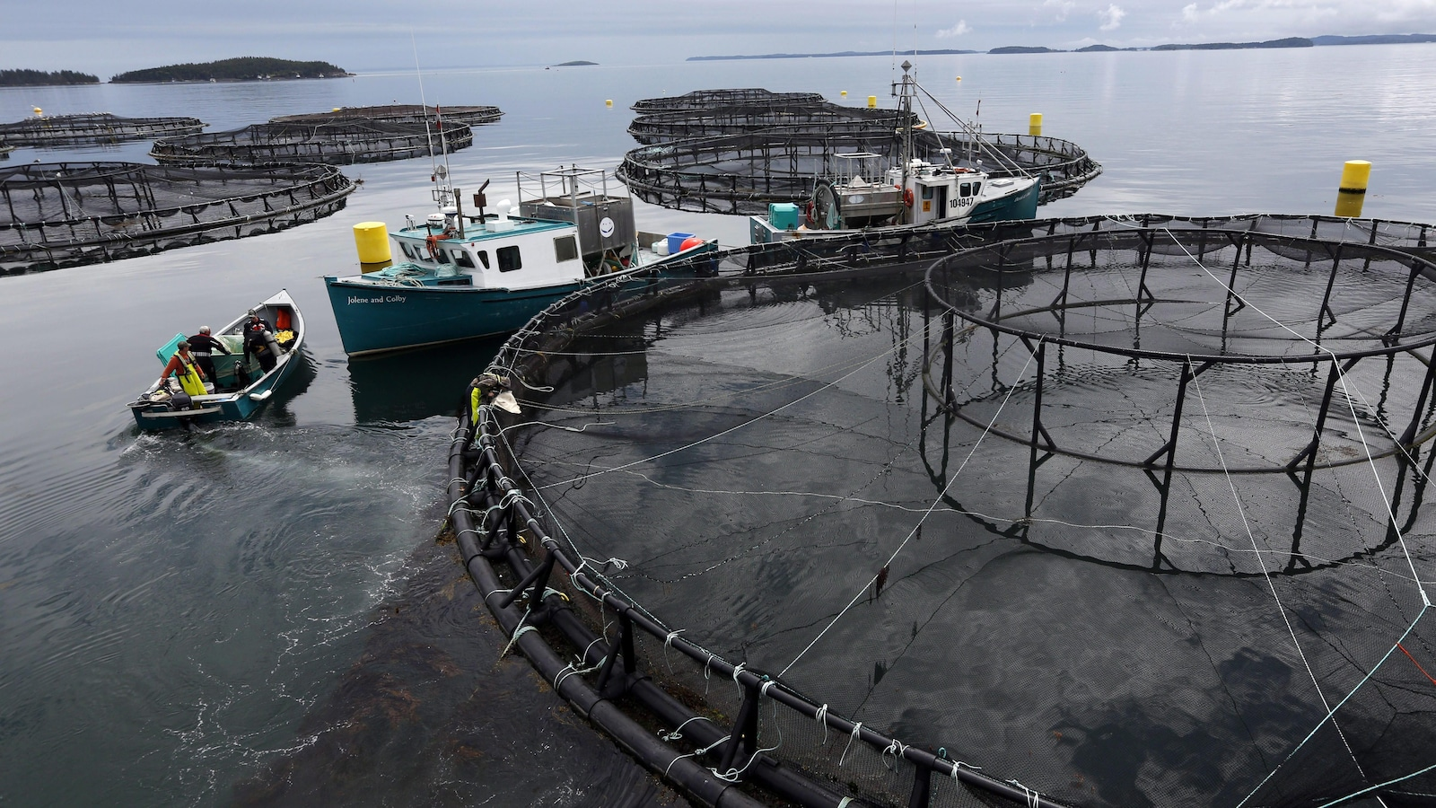 Une ferme d'élevage de saumon de Cooke Aquaculture à Blacks Harbour, au Nouveau-Brunswick, en juillet 2017.