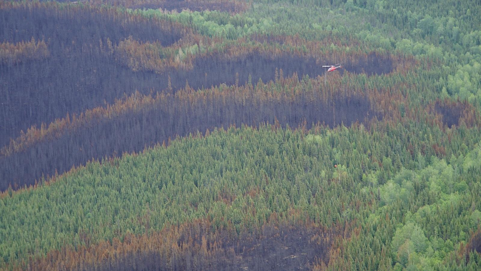 Une vue aérienne montre une forêt à demi brûlée par un incendie qui n'est toujours pas maîtrisé à Labrieville. On aperçoit un hélicoptère des pompiers forestiers qui travaillent dans ce secteur.