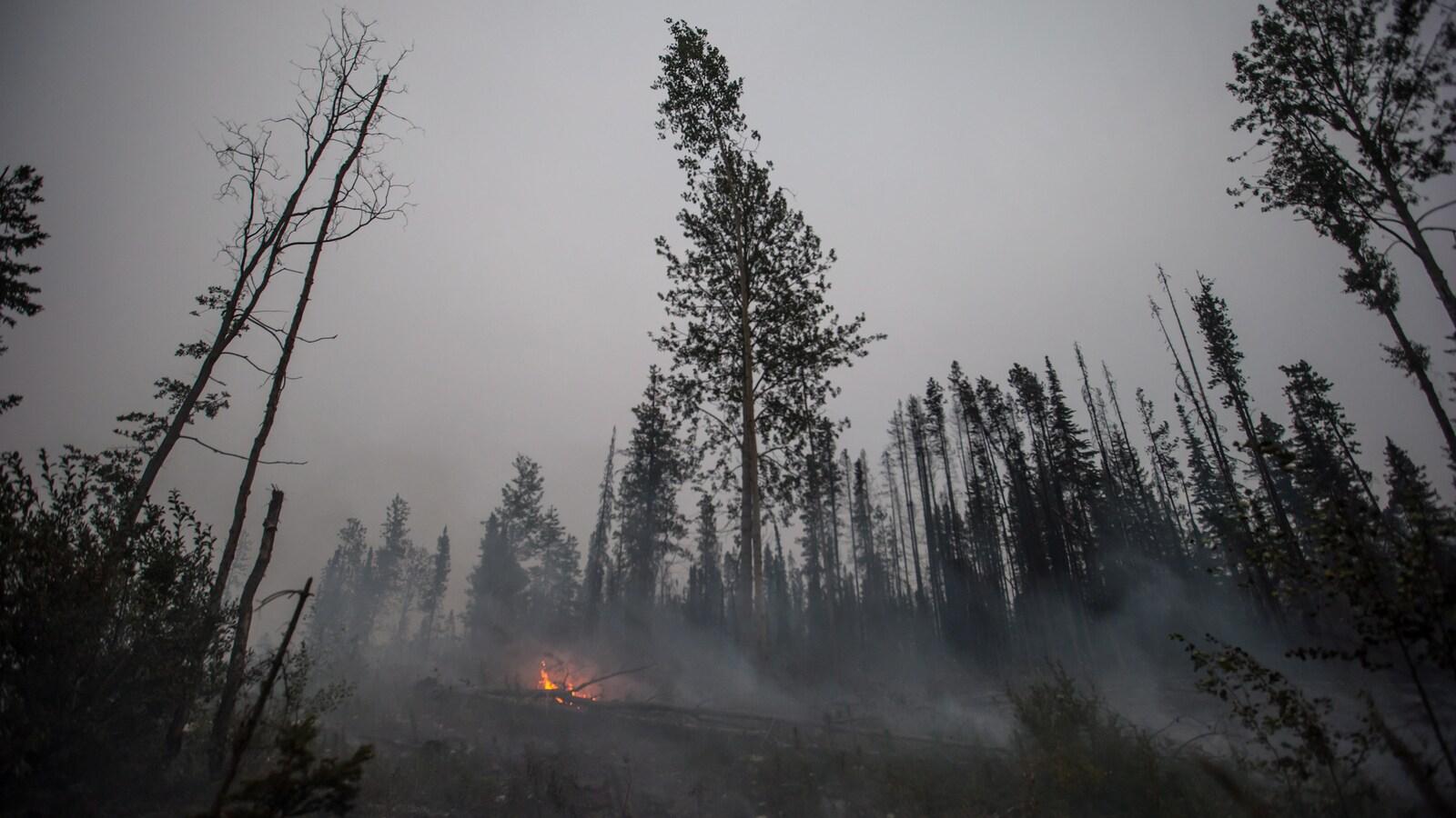 Une forêt noircie par le feu, avec quelques flammes brûlant encore.