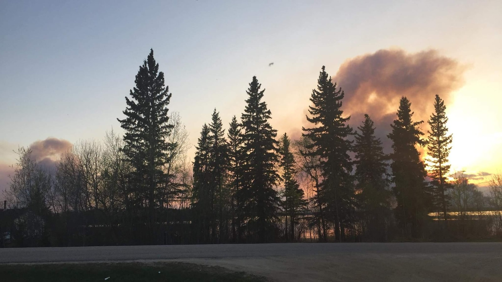 Des nuages de fumée sont dans le ciel au soleil couchant derrière des arbres.