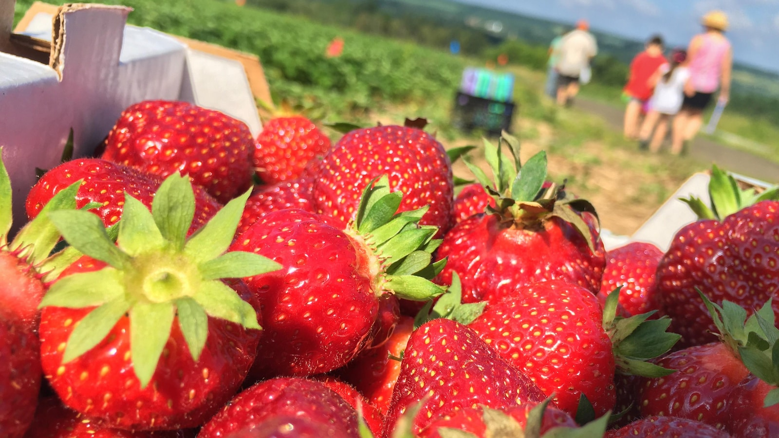 Un casseau rempli de fraises est placé en premier plan