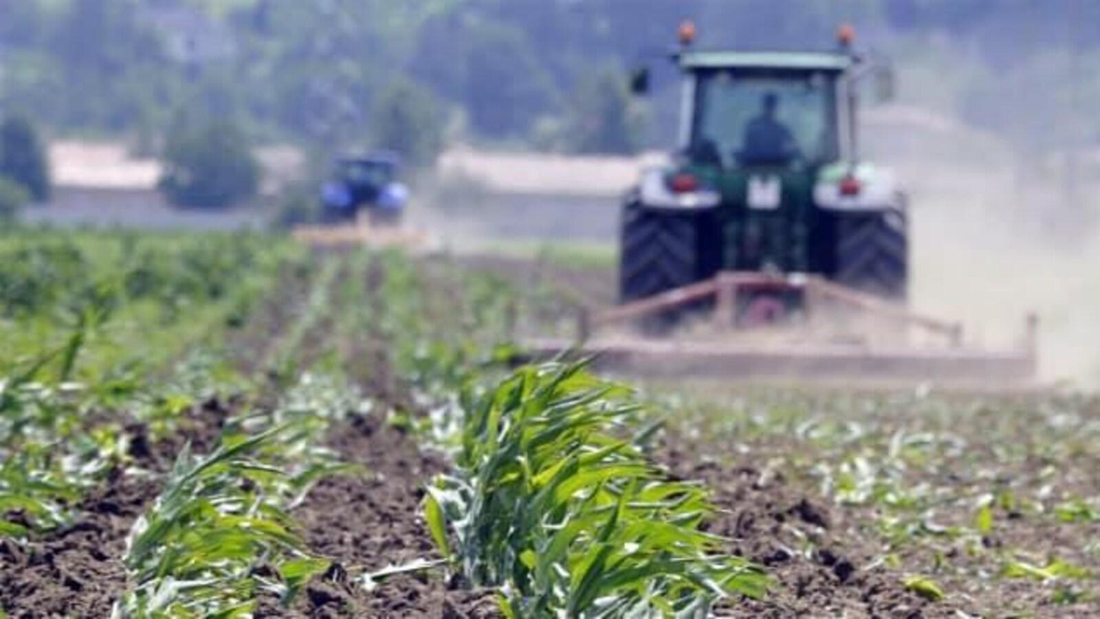 Un tracteur dans un champ de céréales.