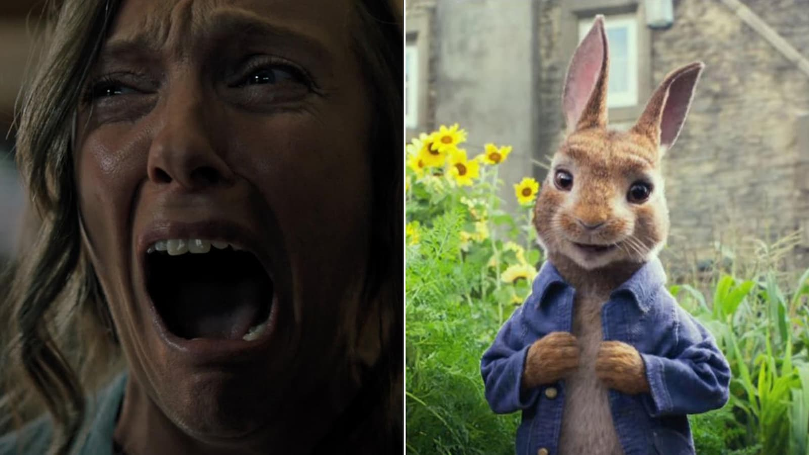 Deux images tirées des films «Hérédité» et «Pierre Lapin»: dans la première, on peut voir une femme horrifiée qui crie, tandis que, dans la seconde, on aperçoit Pierre Lapin, un sympathique lapin animé.
