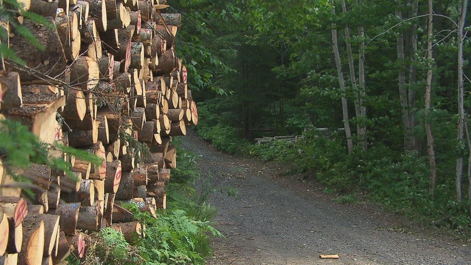 Des billes de bois empilées en forêt.