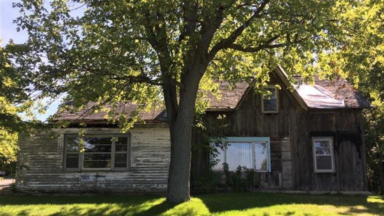 On voit la maison brune, blanche et grise derrière un arbre, ensoleillée.