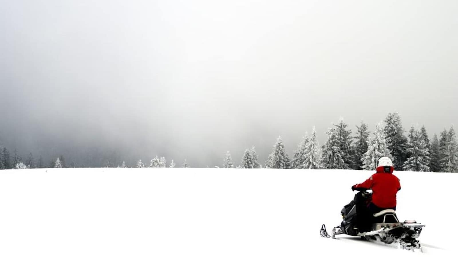 Un motoneigiste avance en montagne avec des sapins devant lui