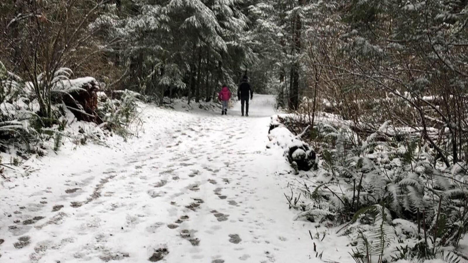 Un chemin couvert de neige dans une forêt.