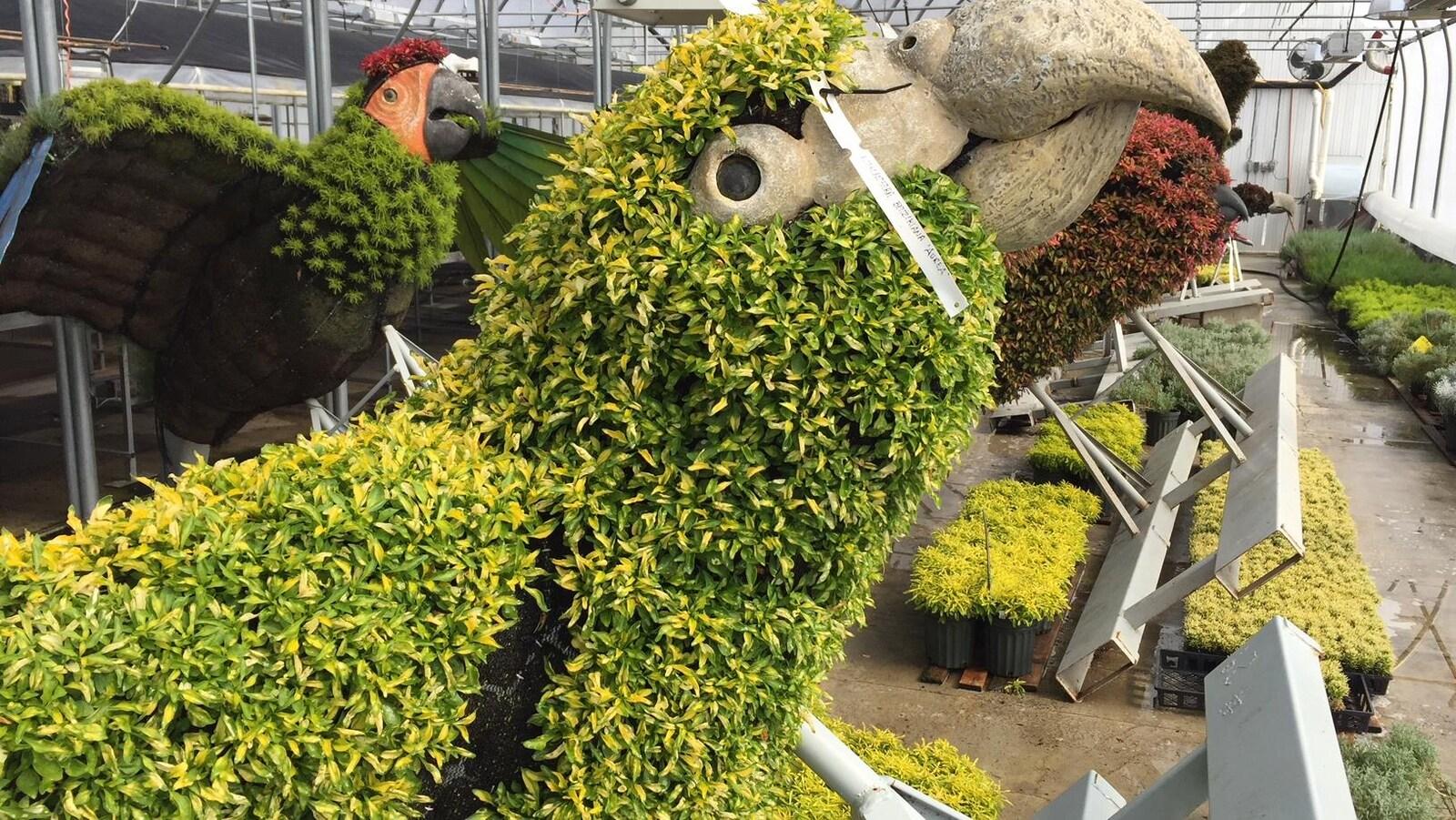 Une structure végétale représentant un perroquet