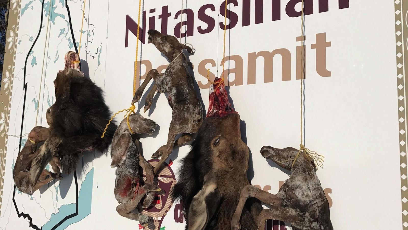 Des restes d'orignaux disséqués suspendus sur une pancarte annonçant le territoire autochtone de Nitassinan
