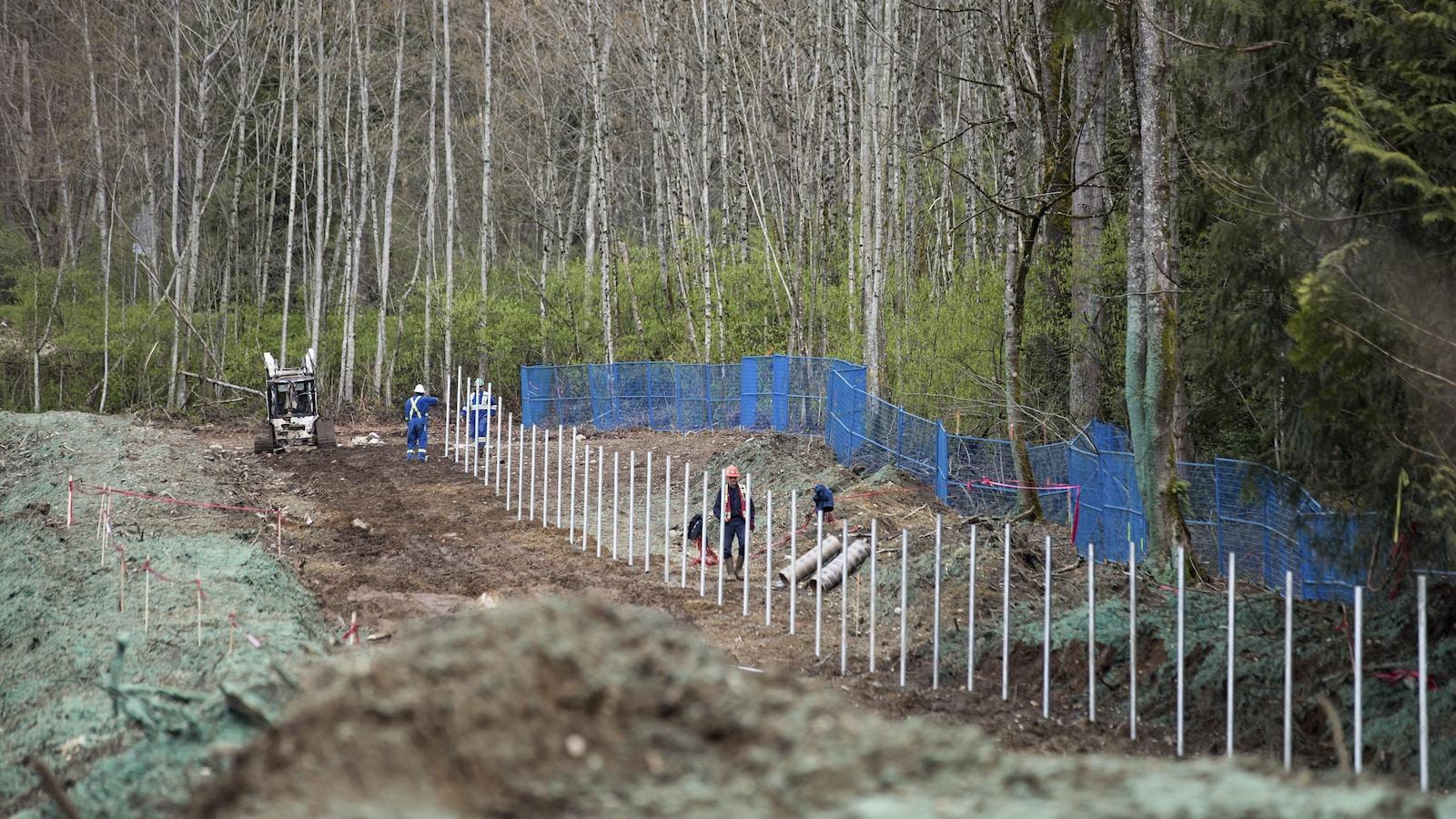 Une clôture est aménagée dans un secteur boisé.