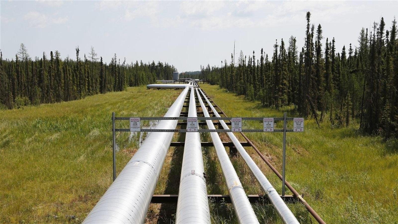 Des pipelines dans une allée en plein bois