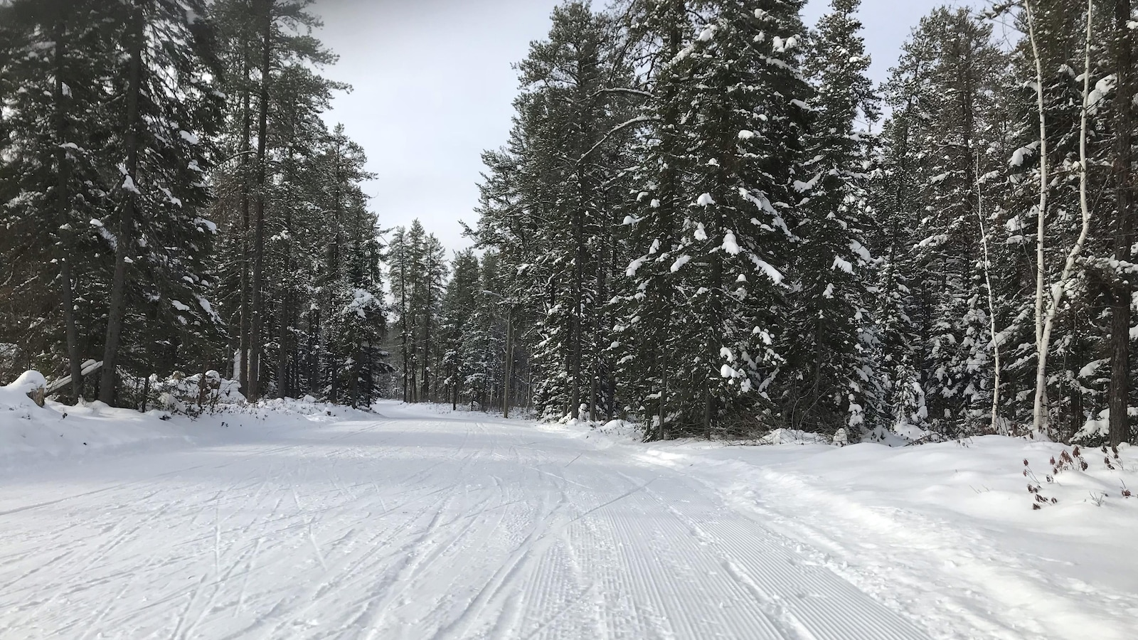 Une piste de ski de fond dans la forêt boréale, en hiver.