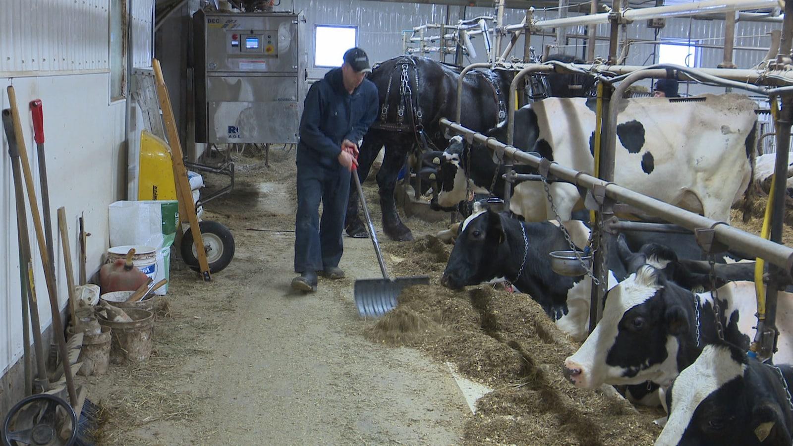 Le producteur laitier Mathieu Filion au travail sur sa ferme laitière