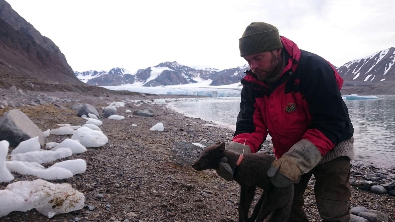 L'un des chercheurs norvégiens tient la petite renarde dans ses mains.